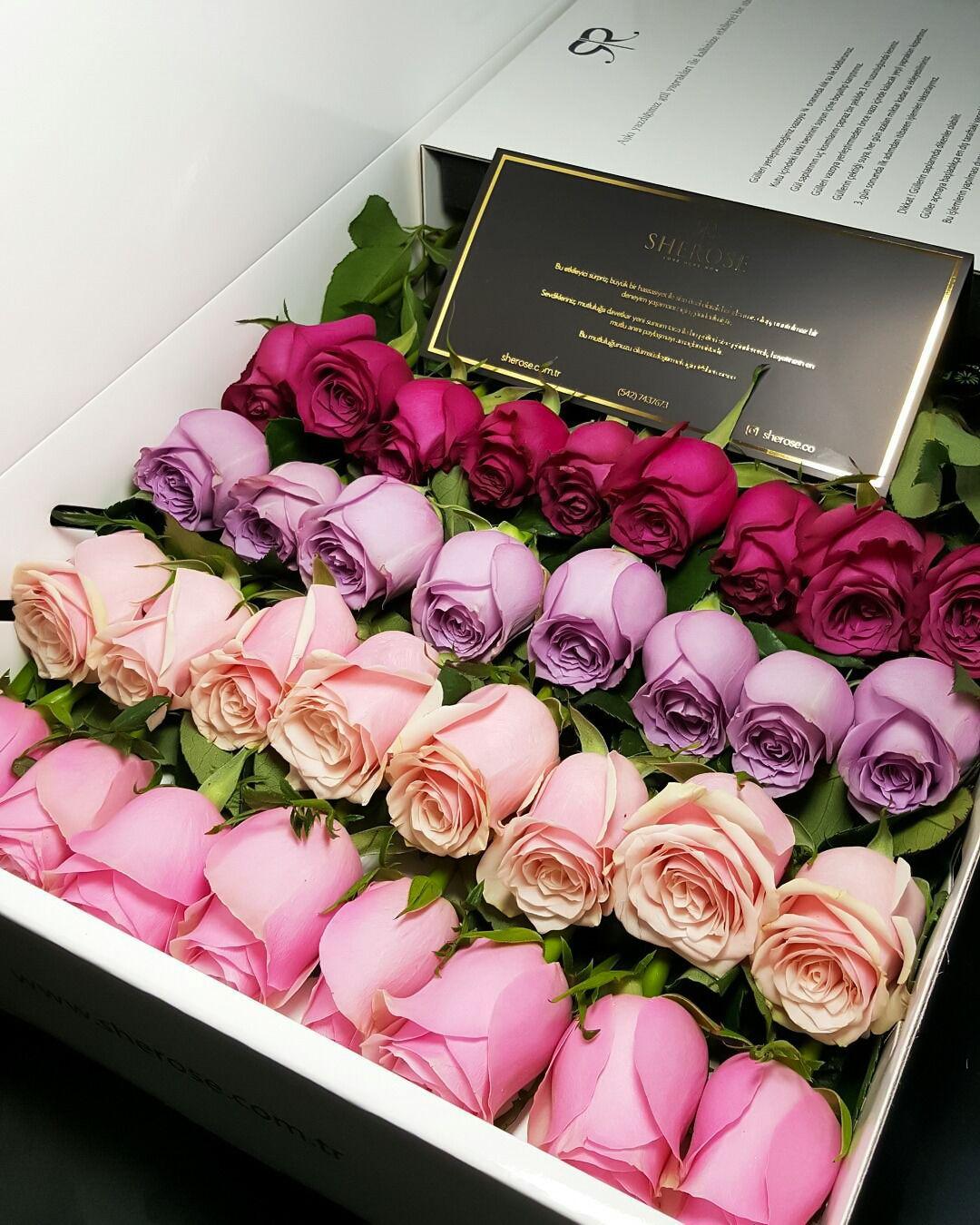 Las 20 Fotografías De Flores Más Hermosas E Impactantes Del
