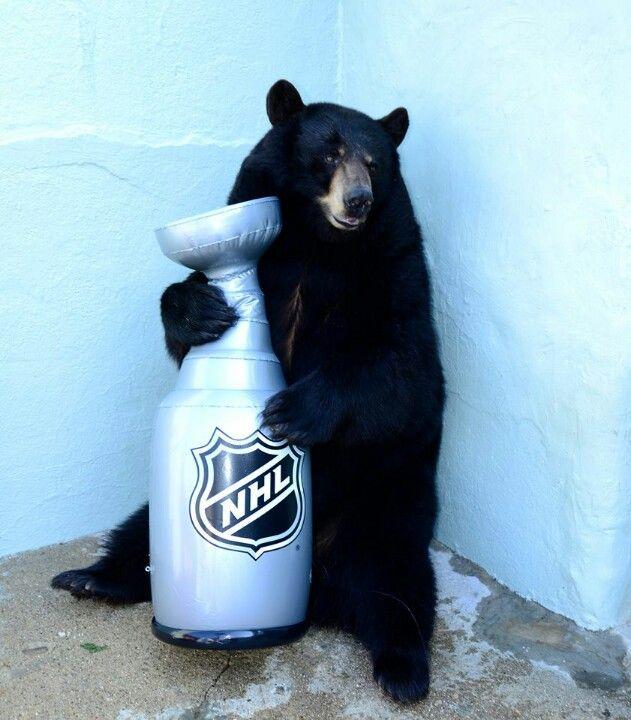 Victoria From Clark S Trading Post Poke The Bear Dont Poke The Bear Bear