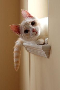 what a cute kitty