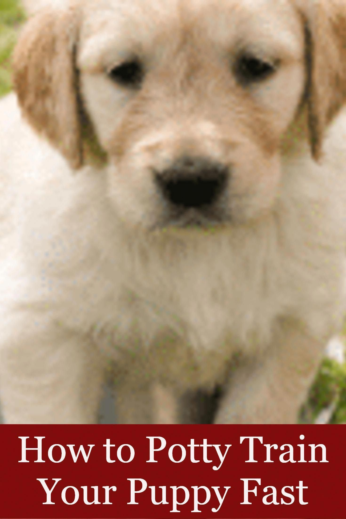 How To Potty Train Your Puppy Fast How To Potty Train A Puppy