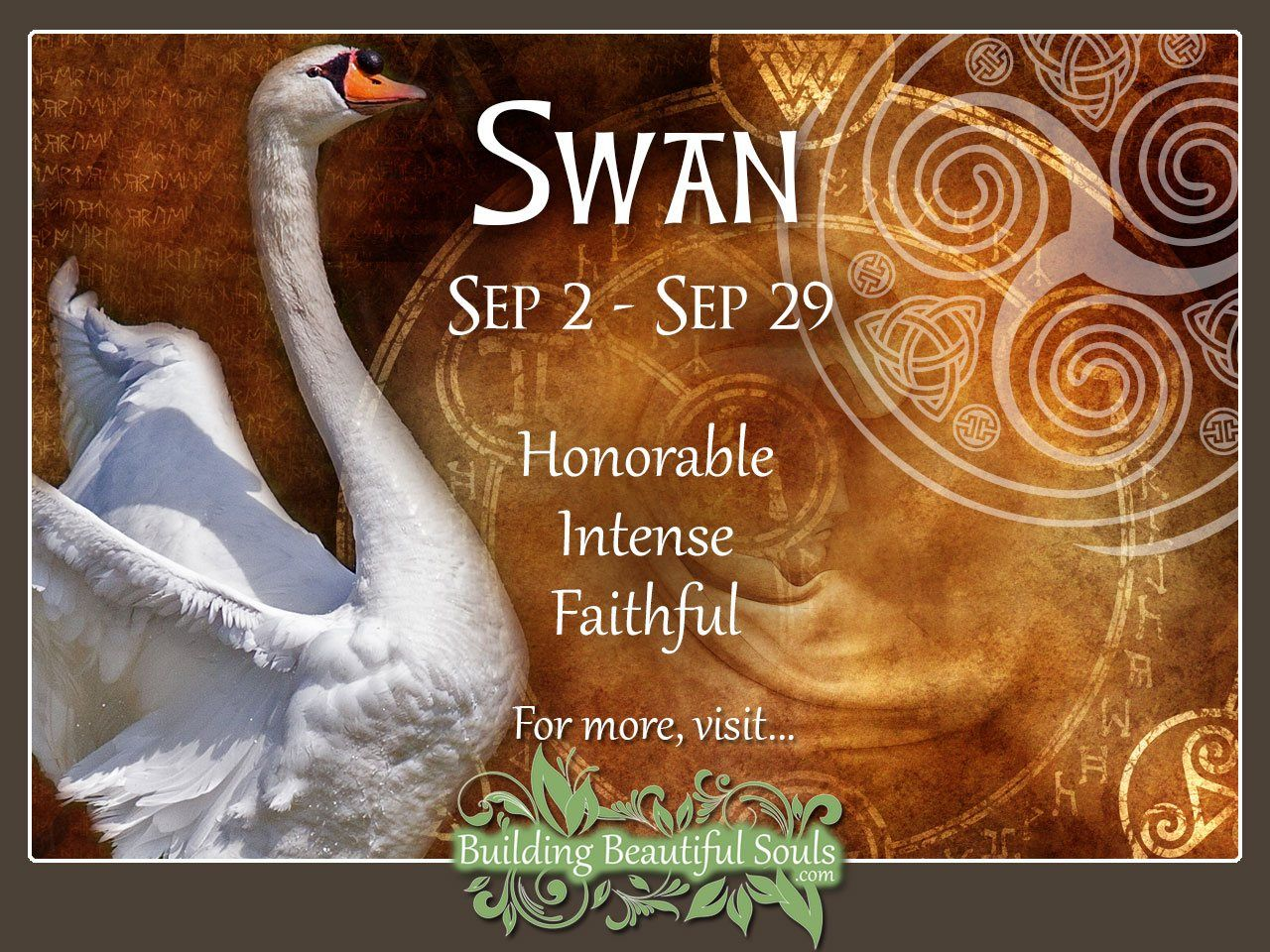 Swan Celtic Zodiac Sign Meanings Traits Personality