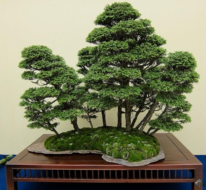 stunning forest styled bonsai displayed at the kokufuten. Black Bedroom Furniture Sets. Home Design Ideas