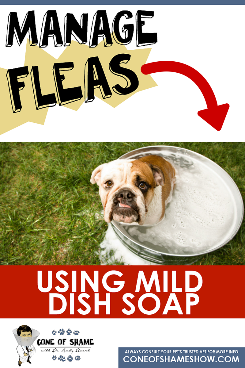 Manage Fleas On Your Dog Or Cat Using Dawn Or Another Mild Dish Soap Click For Details Home Remedies For Fleas Pet Trust Flea Remedies