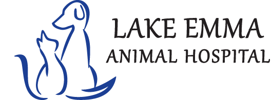 Veterinary Clinic Lake Mary Animal Hospital Veterinary Clinic Vets Near Me