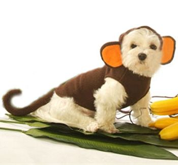 Monkey Dog Costume Small Big Dogs Sizes With Images Small