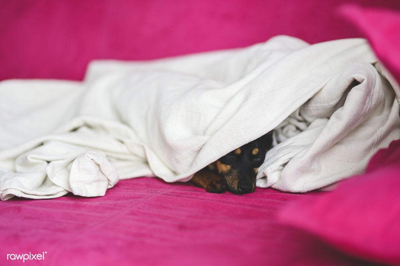 Little puppy sleeping in a bed free image by rawpixel