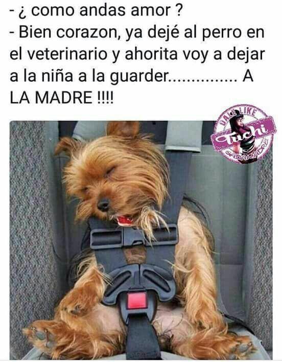 Un Poco De Humor Memes Chistosos En Espanol Humor Divertido Sobre Animales Imagenes De Risa Memes