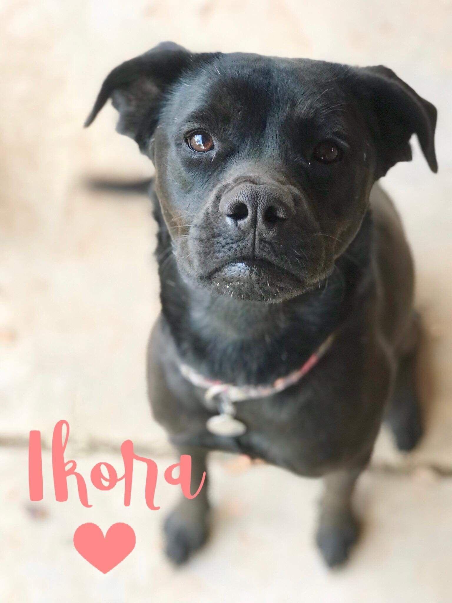 Adopt Ikora On Dogs Animal Rescue Animals