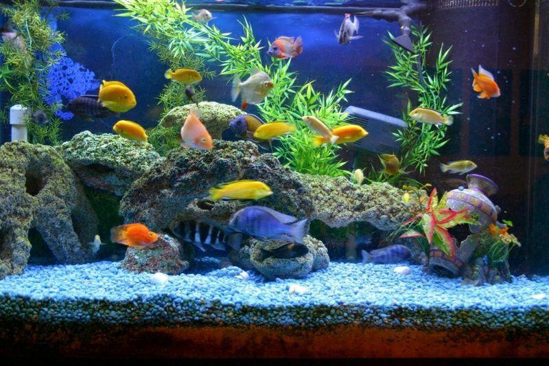 Aquarium Deko Selber Machen Inspirierende Ideen Und Tipps Dekoavec 39faszinierende Aquariumeinrichten Selberbau Aquarium Deko Aquarium Einrichten Aquarium