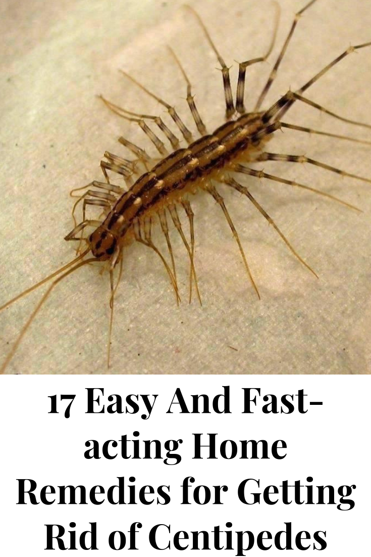 How To Get Rid Of Centipedes In Home Naturally