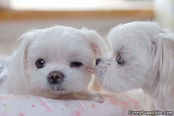 Cute Puppy Whisper - funnypuppysite.com