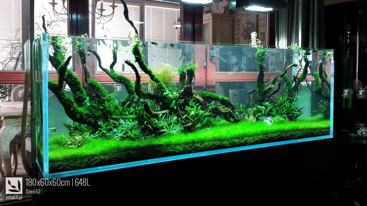 L prírodné akvárium aquarium pinterest aquarium freshwater