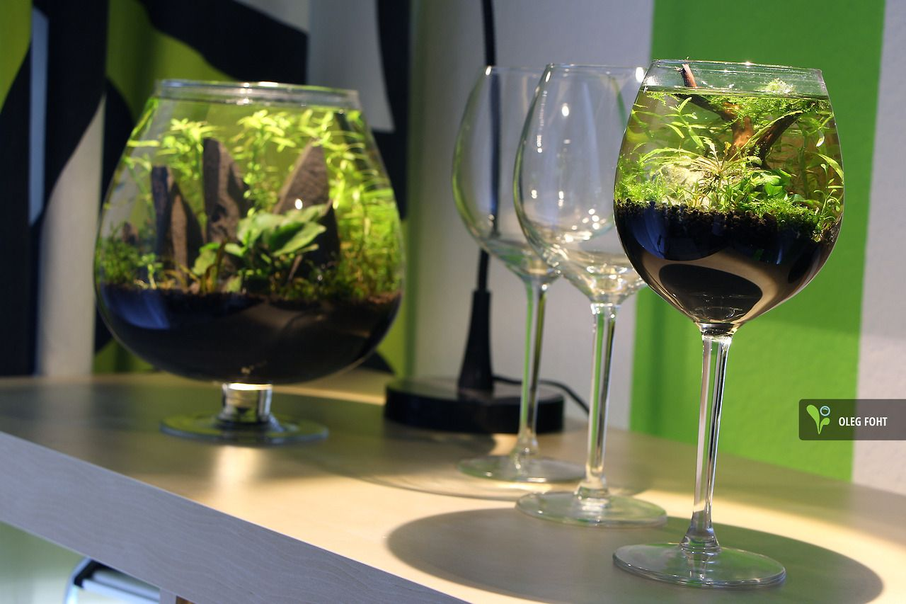 Cheers! biconeo-aquascaping:  Meine Mini-Scapes #aquascaping #aquarium
