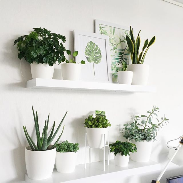 All white pots  shelves deco nature bedroom plants plant also amazing indoor garden decorations tips and ideas home decor rh pinterest