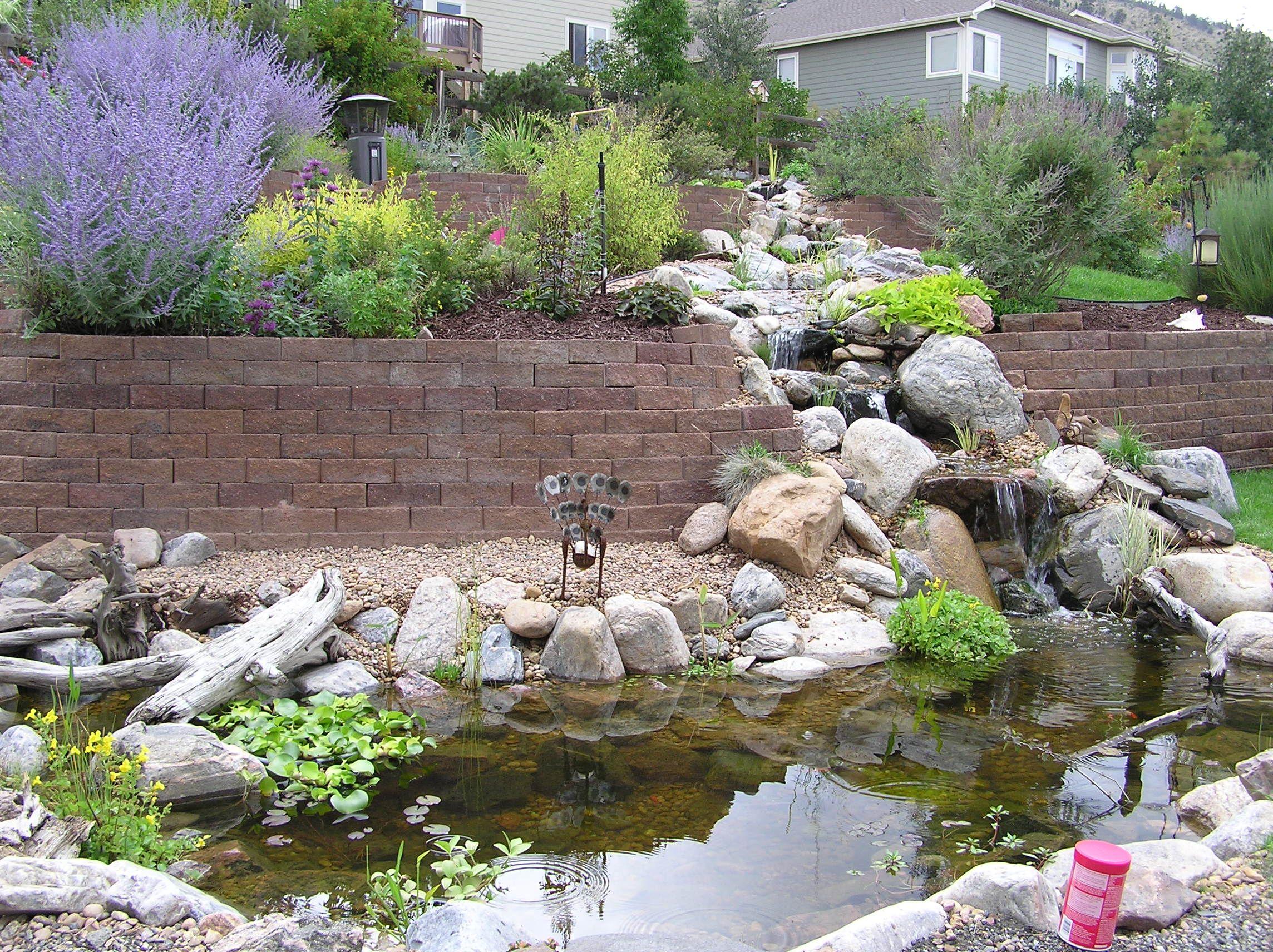 Golden colorado ecosystem pond water gardens koi for Koi pool water gardens thornton