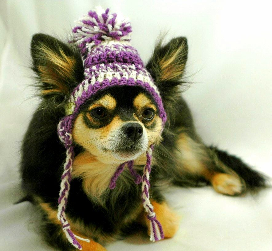 2.26.15-Dogs-Who-Are-NOT-Happy-About-Their-Hats14.jpg (885×816)