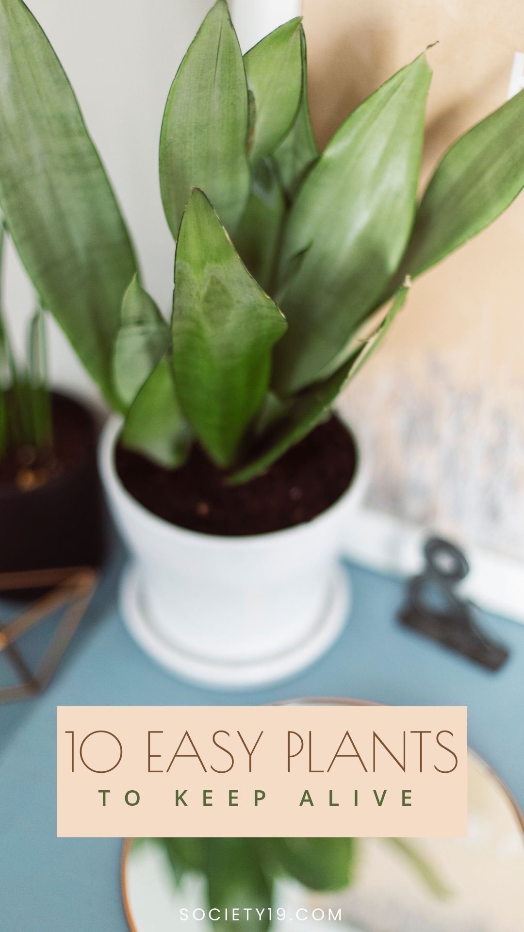 10 Cute Plants You Can Actually Keep Alive Society19 Plants Easy Care Houseplants Small House Plants