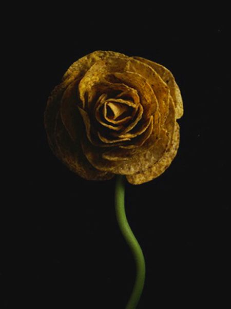 Nir Adar   Tera flowers