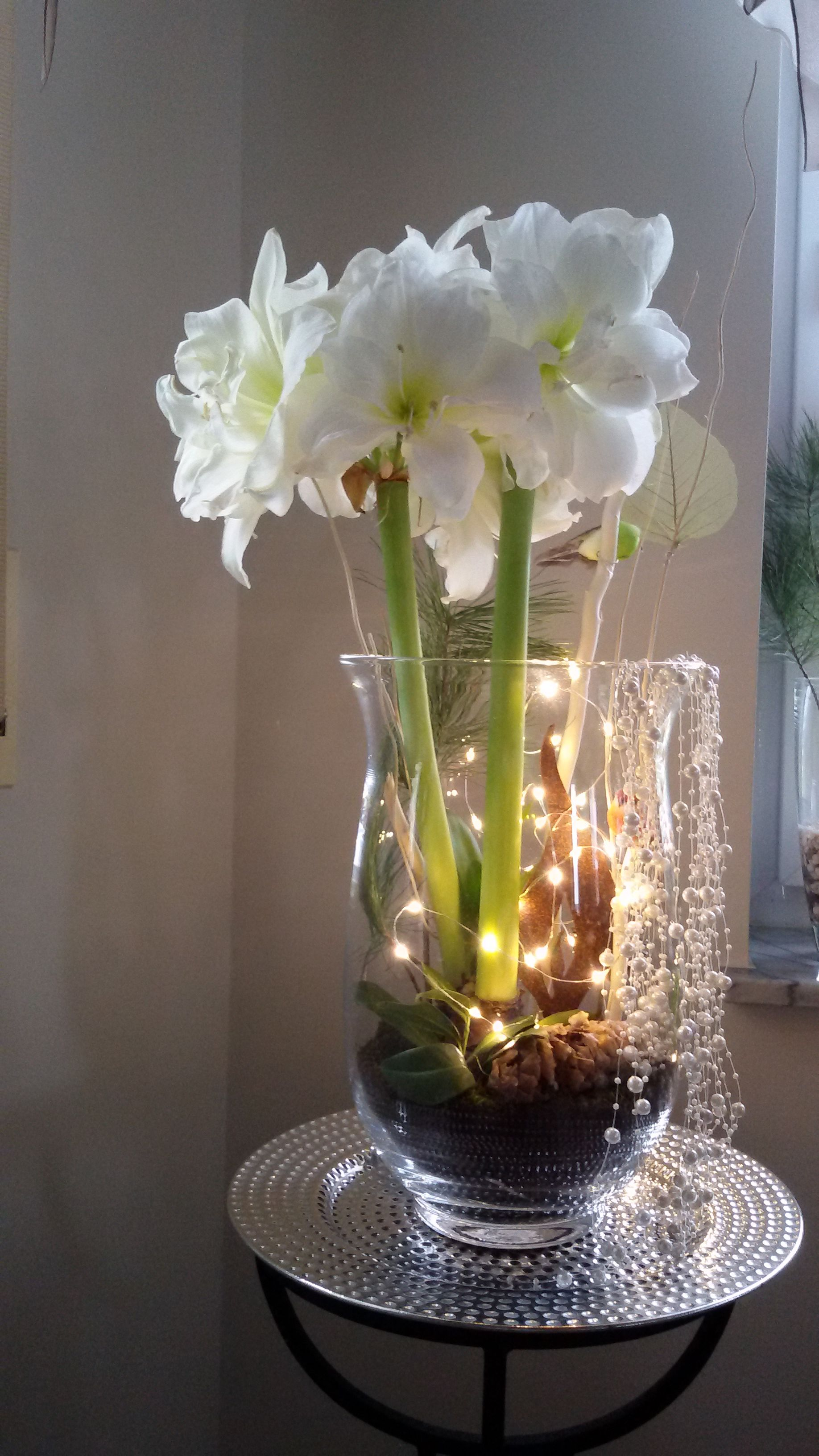 Amarylis im Glas #amaryllisdeko