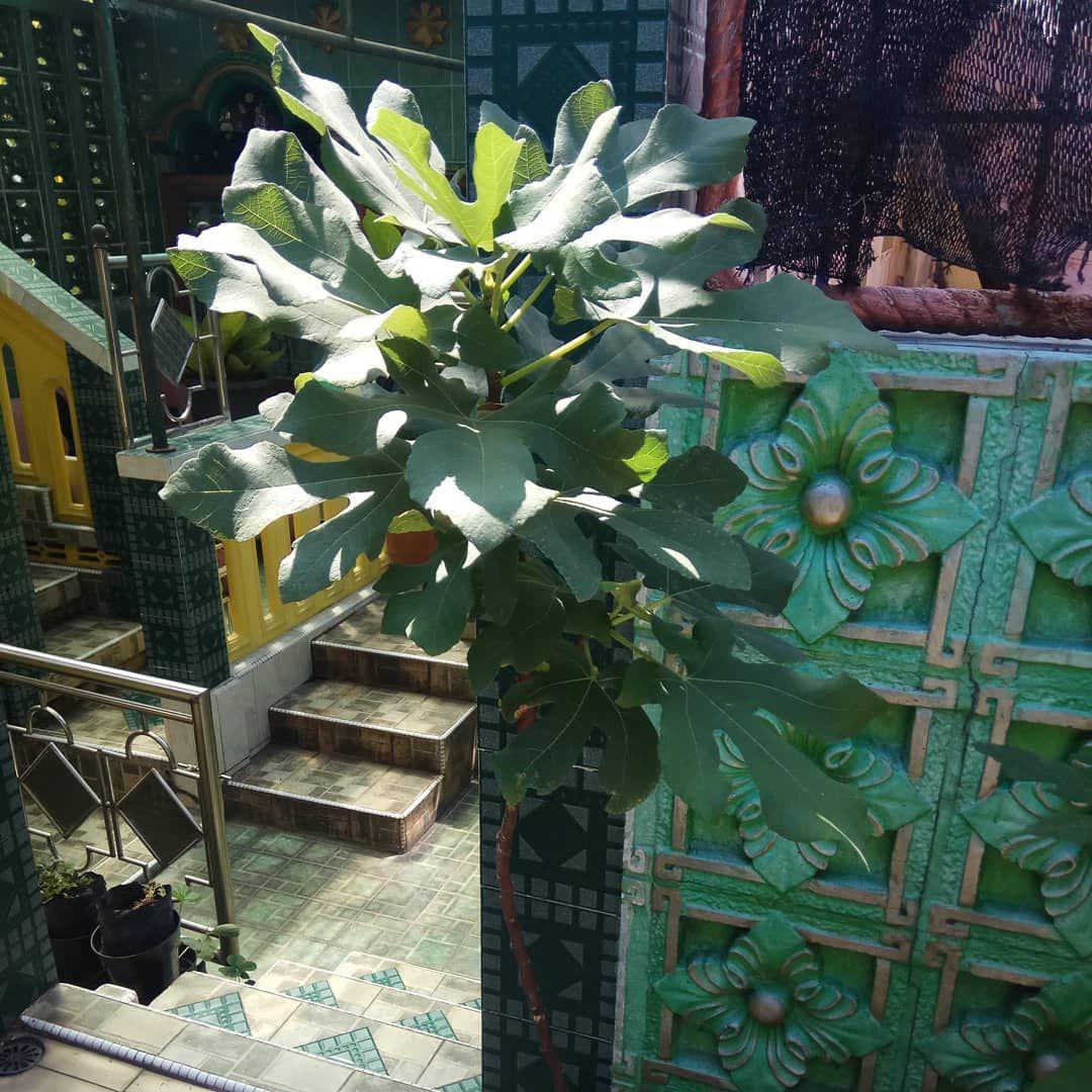 Tin varian green yordan, rasa buah nya tetep favorit kalau
