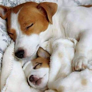 Lindos Sonhos!!! ⭐️