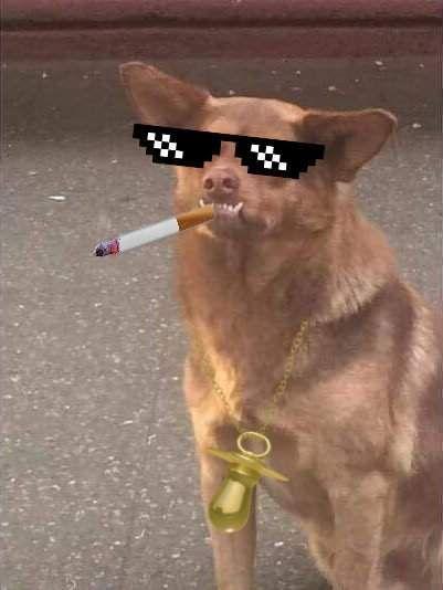 La Historia De Chilaquil El Perro Mas Viral Y Famoso De Todo Mexico Incluye Memes Memes Memes Perros Memes Divertidos