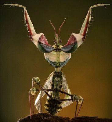 Самые ужасные насекомые мира (с изображениями) | Насекомые ...