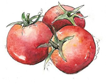 Watercolor tomatoes, T...