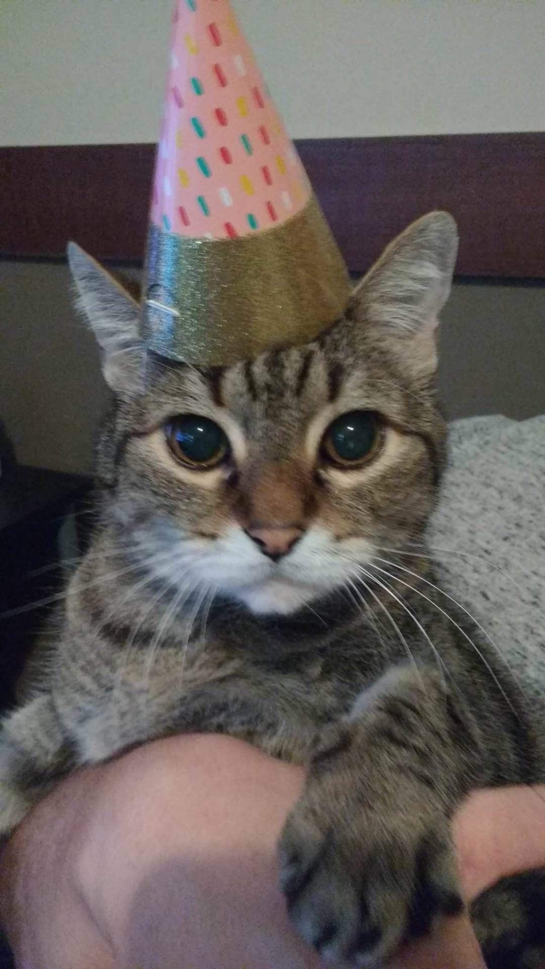 Happy 15th Birthday Mr Bubbles By Terpin Cats Kitten Catsonweb Cute Adorable Funny Sleepy Animals Nature Happy 15th Birthday 15th Birthday Funny Cat Pictures