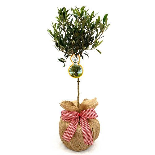 Pin by mez meryl cheetham on misc ideas pinterest easter and are you interested in our olive tree gifts with our plant gifts you need look no further negle Gallery