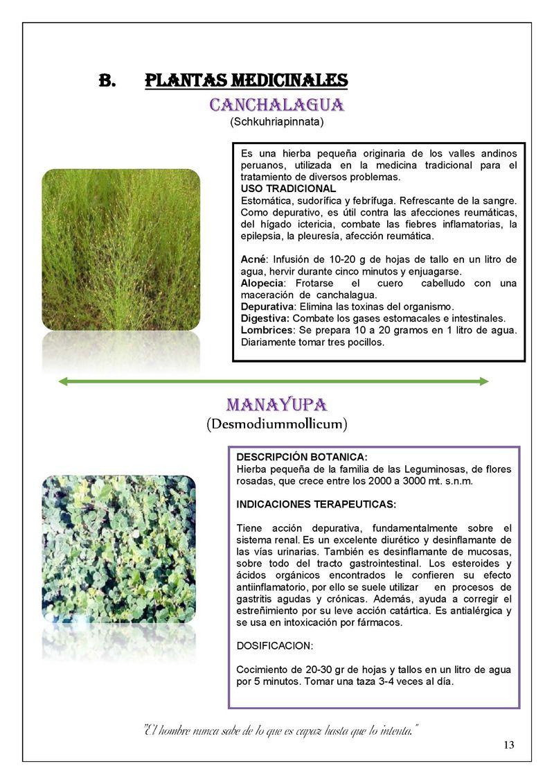 Monografiascom  creaciones paty  Plantas nativas