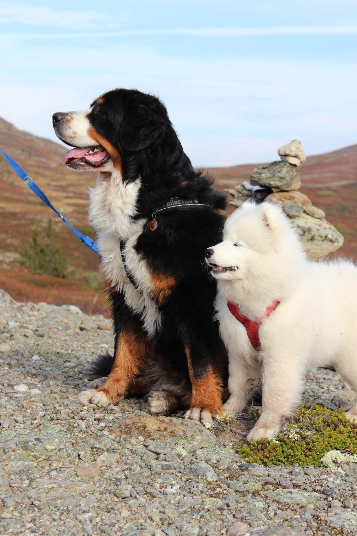 Two Of My Top Ten Faves Samoyed Dogs Polar Bear Dogs Dog