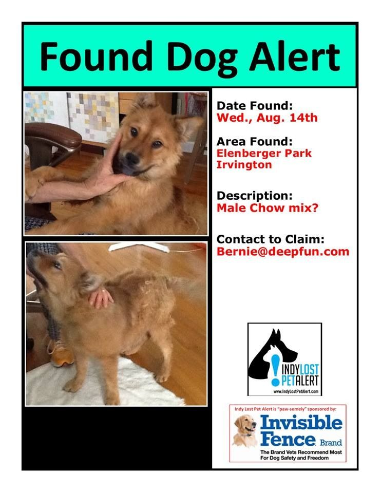 Irvington Indianapolis In Elenberger Park Founddog 8 14 13 Male Chow Mix Bernie Deepfun Com Https Www Facebook Com Losing A Dog Dog Branding Find Pets