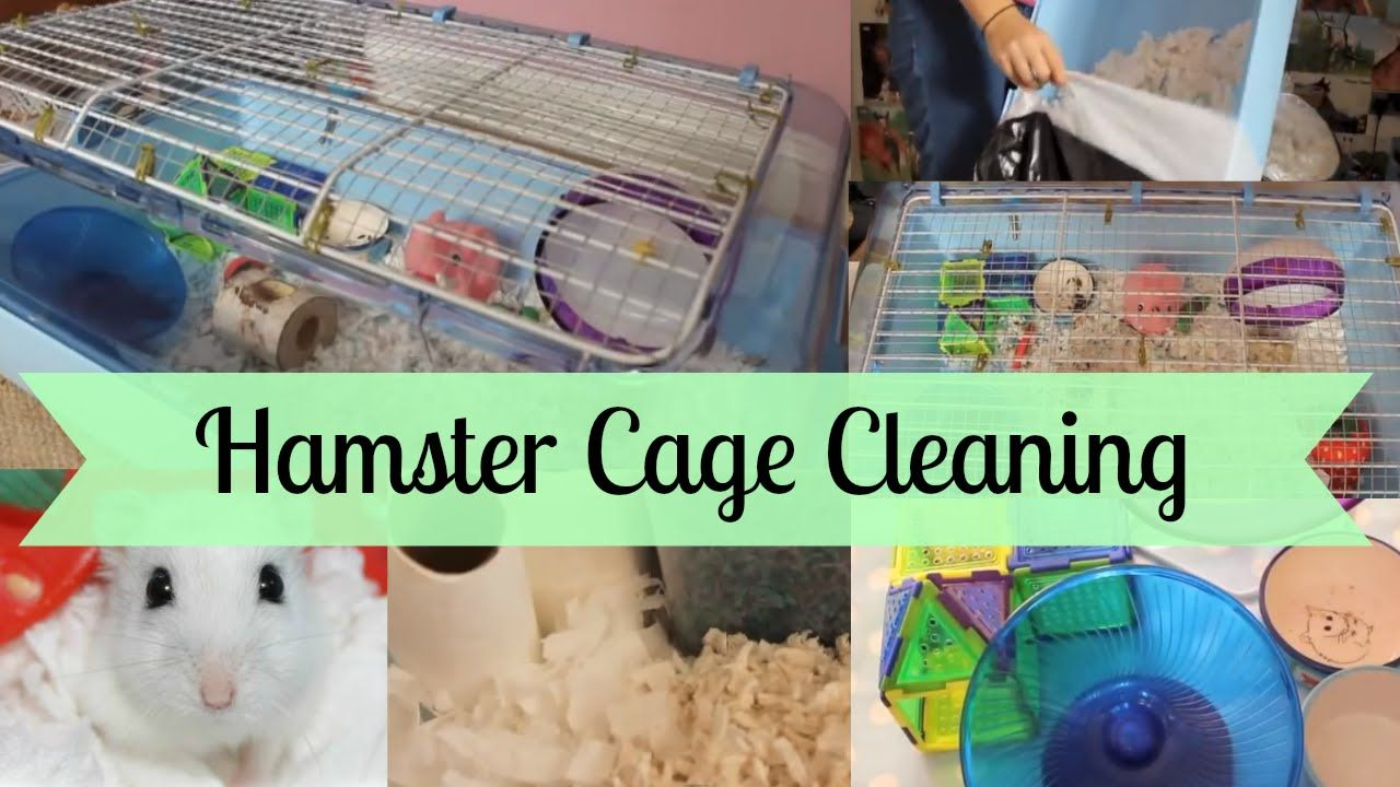 How To Clean How To Clean A Hamster Cage Hamster Horsesandcats Youtube Hamster Hamster Cage Cage Cleaner