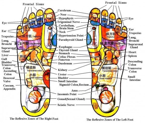 Foot Diagram To Mainly Explain You About The Structure Of Human Foot