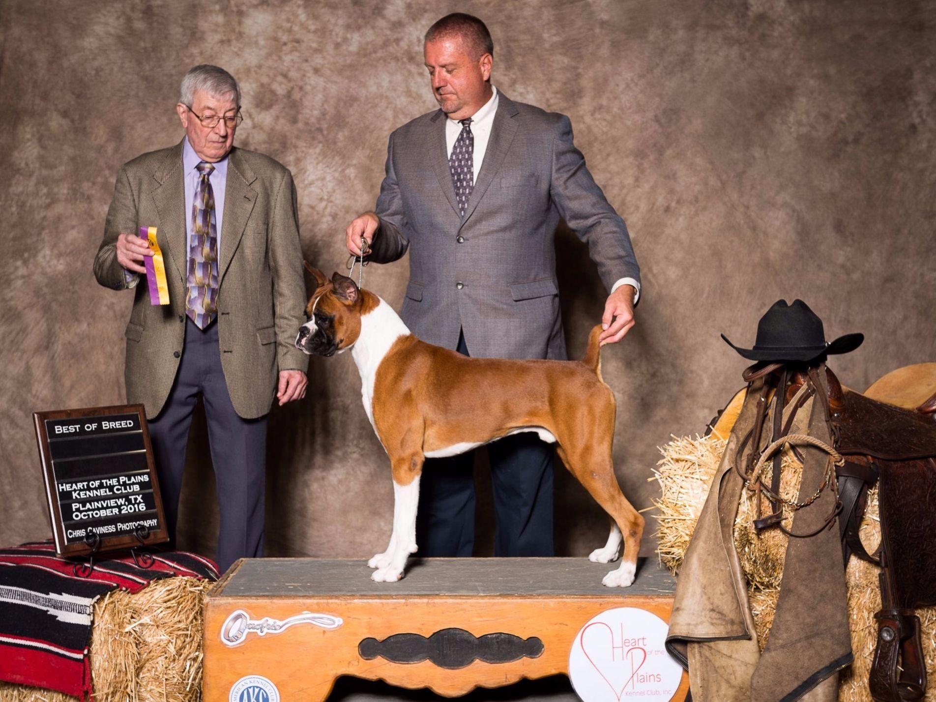Besten Boxers Dean Brenner Has Puppies For Sale On Akc Puppyfinder Akc Puppies For Sale Canine
