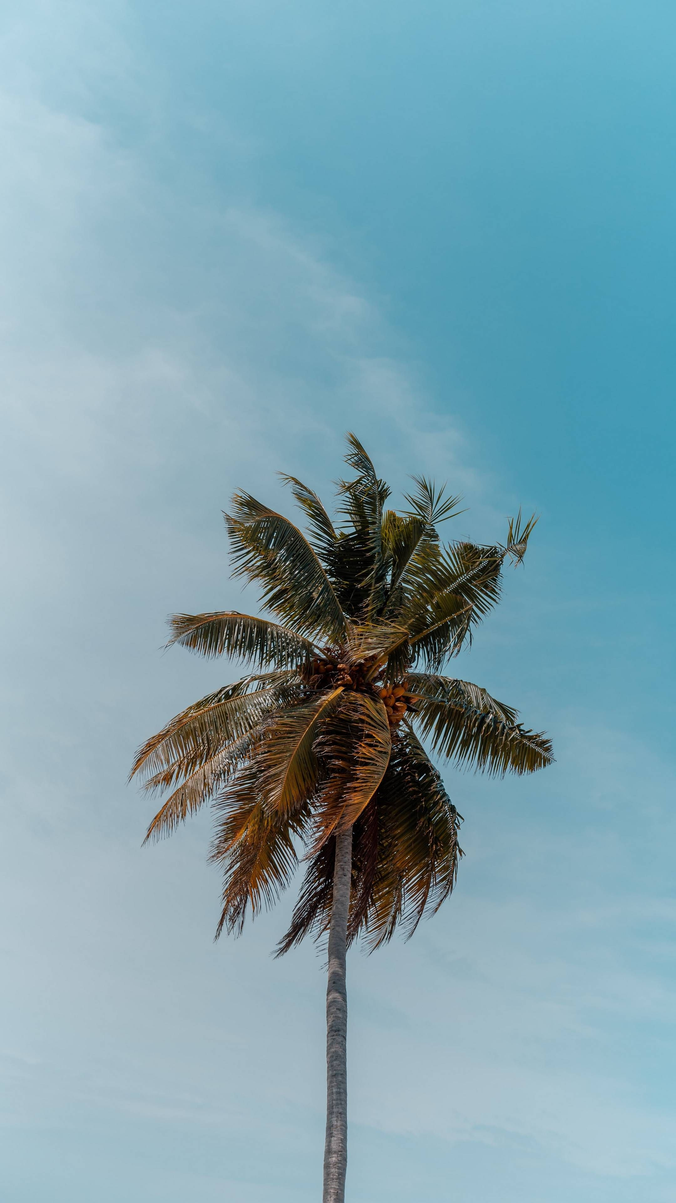 Download Iphone Xs Iphone Xs Max Iphone Xr Hd Wallpapers Palm Tree Tree Crown Top Branches Tree Wallpaper Iphone Palm Trees Wallpaper Blue Sky Wallpaper