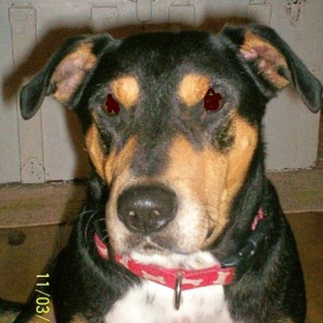 How To Remove Urine Smell From Concrete Subfloor Ehow Com Cat Urine Smells Removing Dog Urine Smell Remove Urine Smell