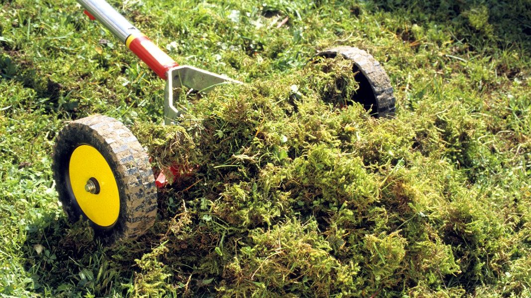 Moos Und Unkraut Im Rasen Entfernen Moos Im Rasen Rasen Entfernen Moos Im Rasen Entfernen