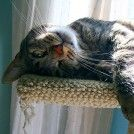 4 Do-It-Yourself Cat Toys You Can Make for Cheap | Catster