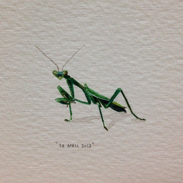 Day 114 Praying Mantis 27 X 23 Mm 365paintingsforants