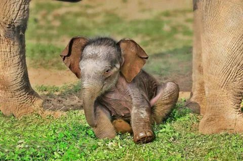 Baby Ele Animals Beautiful Elephant Rescue Cute Animals
