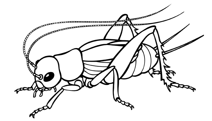 Cricket Insect Drawing Png 698 400 Cricket Insect Butterfly Coloring Page Art