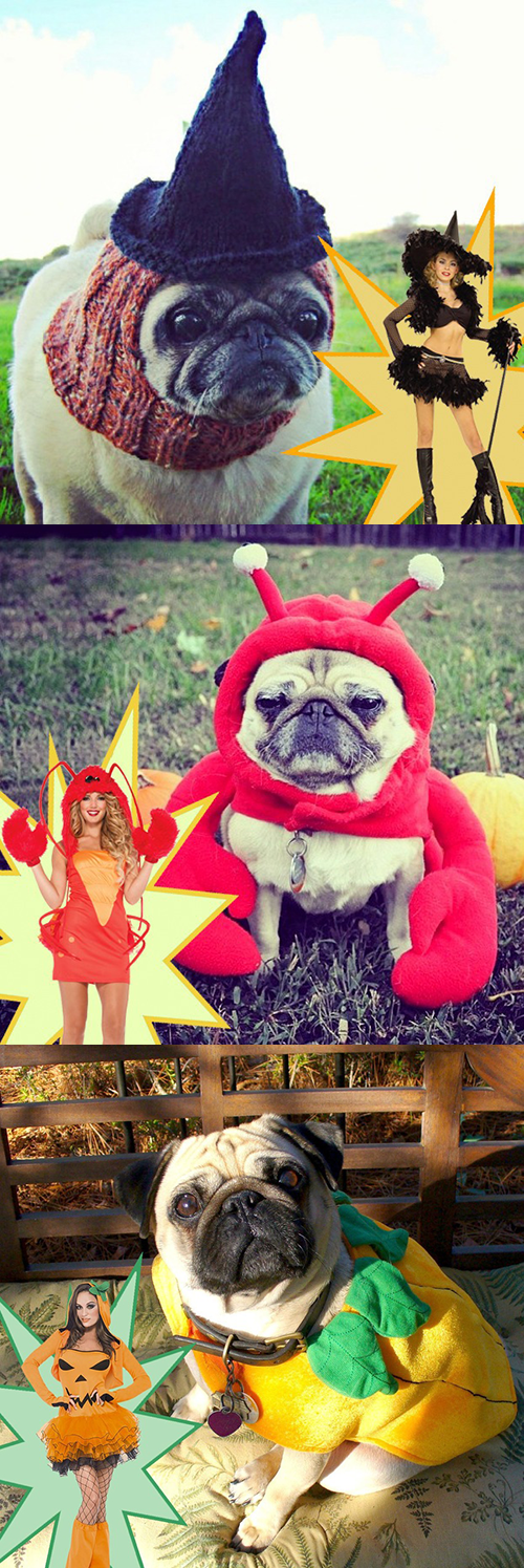 Who wore it better? Halloween edition. These pugs know what they're doing.