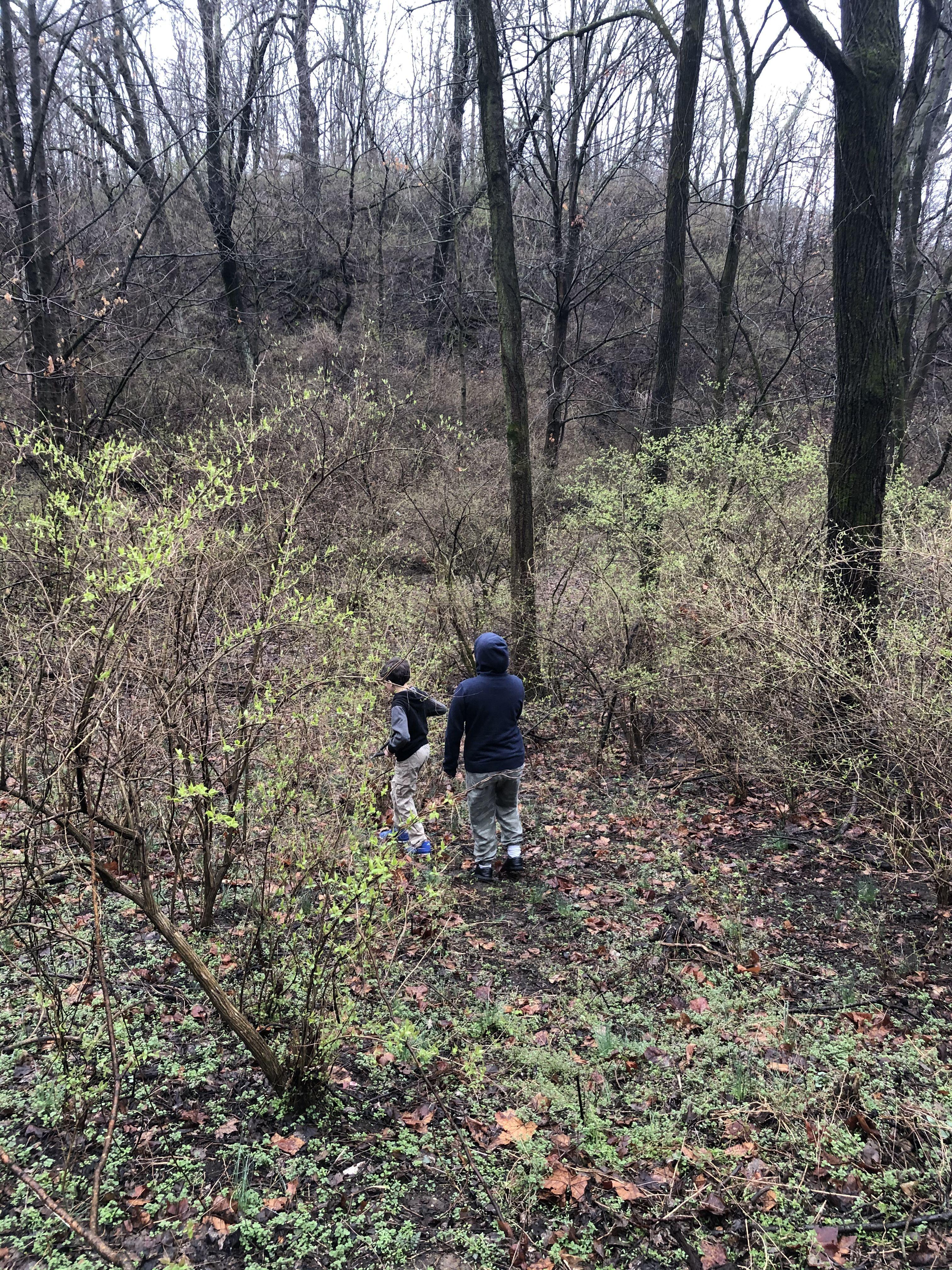 Exploring Our Own Backyard in 2020 | Backyard, Working ...