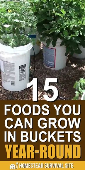 15 Foods You Can Grow In Buckets Year-Round - Home