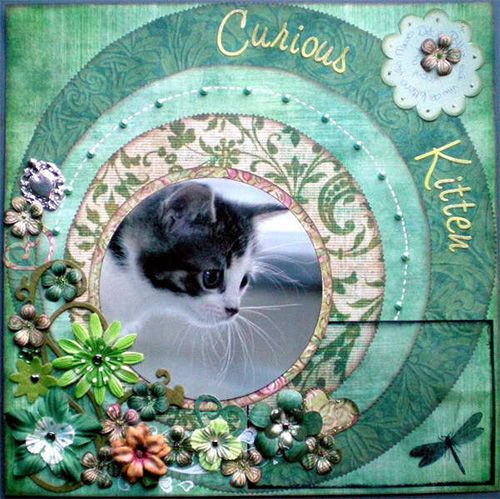 Rpcurious Kitten Layoutg Scrapbooking Pinterest