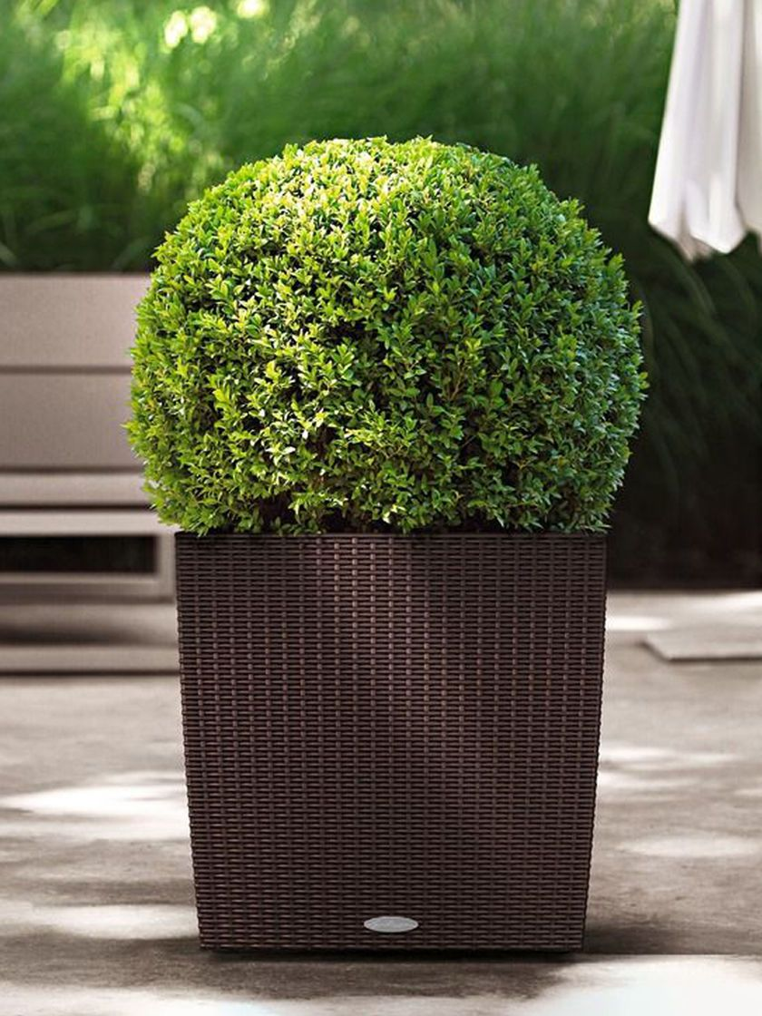 Cube Planter Cottage Wicker Self Watering 16 Sq Gardeners Com