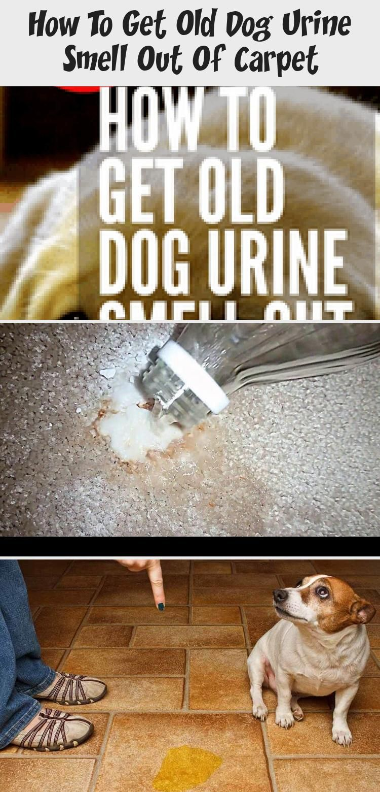 How To Get Old Dog Pee Smell Out Of Carpet Whole House Smell Like Dog Urine It S Probably In The Carpet Check Out These Pet In 2020 Dog Urine Dog Pee