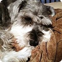 Adopt A Pet :: MIMI (SRC#1858) in NC - Lenoir, NC